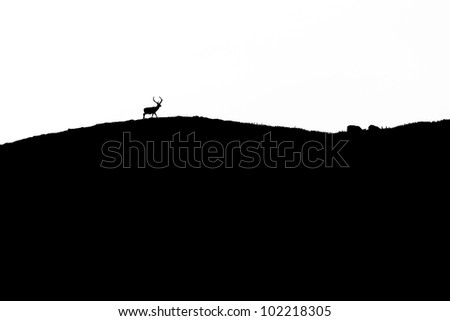 Stag captured against the ridgeline in the evening - stock photo