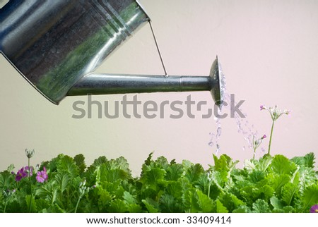 Stainless Steel Watering Can Being Used to Water Flowers - stock photo