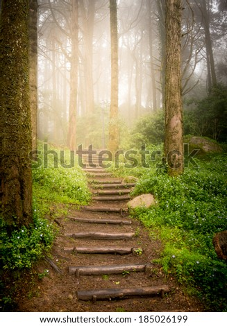 stairs going up hillside in forest toward sunset - stock photo
