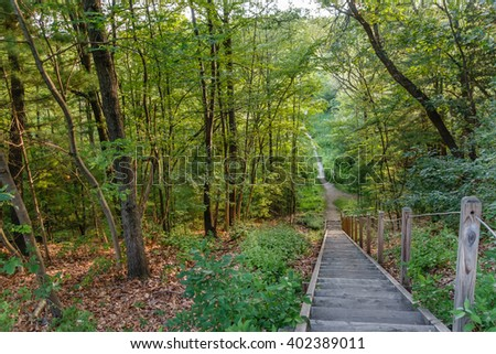 stairs in forest in Andover Massachusetts - stock photo