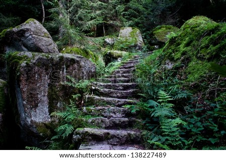 stairs in the wood - stock photo