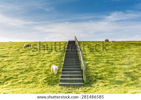 Stairs on a sea dike with sheep in the north of Holland - stock photo
