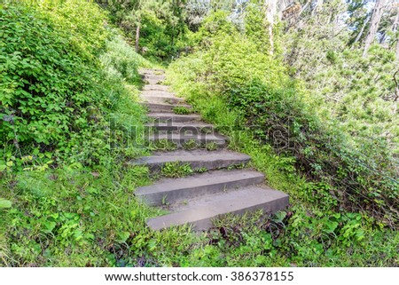 Stairs / steps leading to a forgotten / secret trail, surrounded by green plants, at Point Lobos State Natural Reserve, along the rugged Big Sur coastline, on the California Central Coast. - stock photo