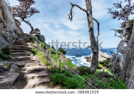 Stairs / steps to nowhere, Cypress tree with red lichen & Spanish moss growing on the branches, surrounding the rocky steep and dangerous Cypress Grove Trail at Point Lobos State Natural Reserve. - stock photo
