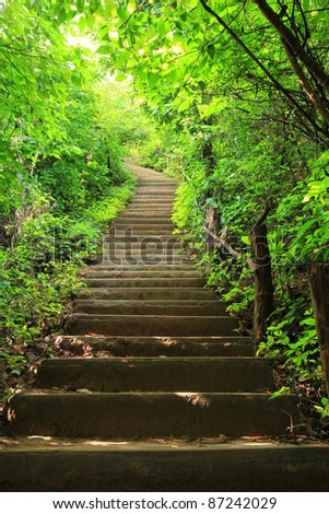 Stairway in the jungle - stock photo