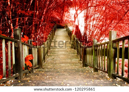 Stairway to jungle, national park, Chiang mai,Thailand - stock photo