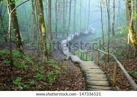 staiway in forest disappearing in strong fog - stock photo
