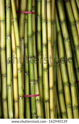 Stalks of fresh sugar cane for extracting the juice - stock photo