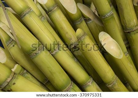 Stalks of sugarcane prepared for producing juice - stock photo