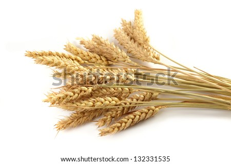 Stalks of wheat ears - stock photo