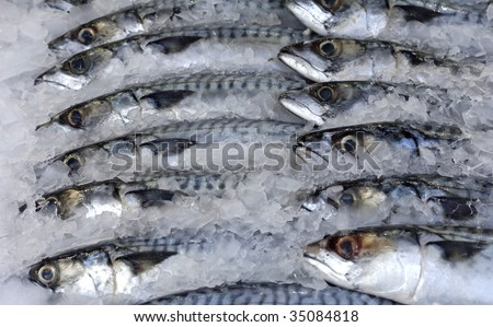 stall of fishes at the fish merchant
