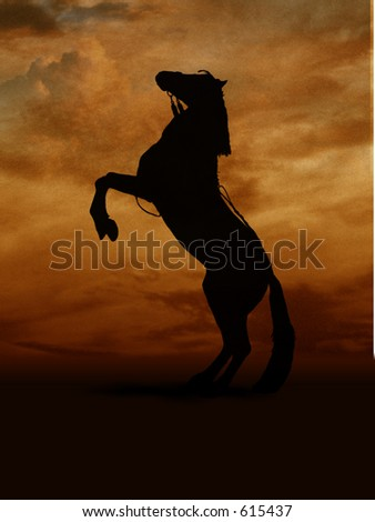 stallion - stock photo