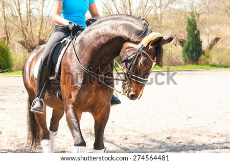 Stallion dressage for competition with riding trainer on it. Multicolored summertime outdoors. - stock photo
