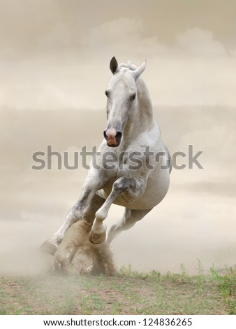 stallion in dust - stock photo