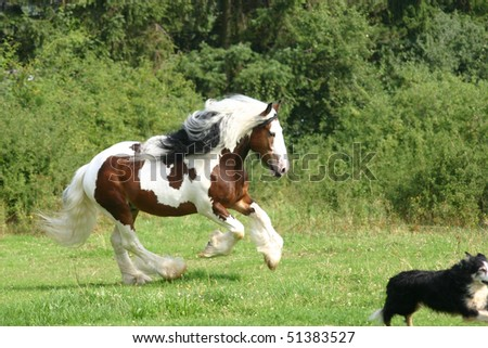 stallion is chasing a dog - stock photo