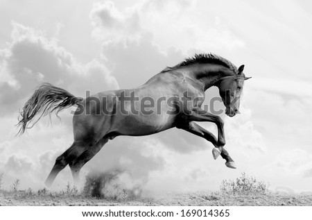 stallion plays - stock photo