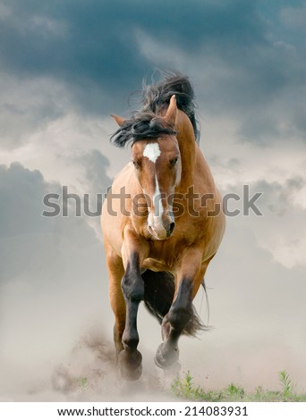 Stallion running - stock photo