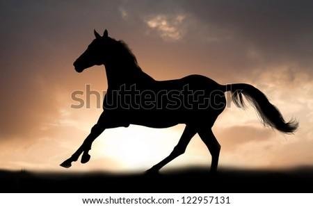 stallion runs - stock photo