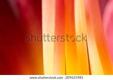 Stamens stems of red flower extreme macro - stock photo