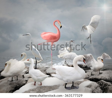 Stand out from a crowd - Flamingo and white birds - stock photo