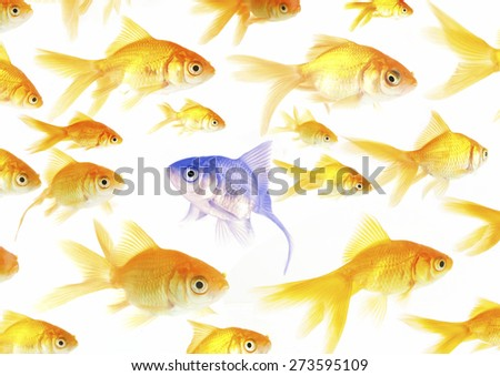 Stand out from the crowd - stock photo