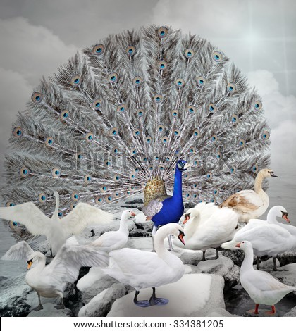 Stand out of the crowd - The blue peacock - stock photo