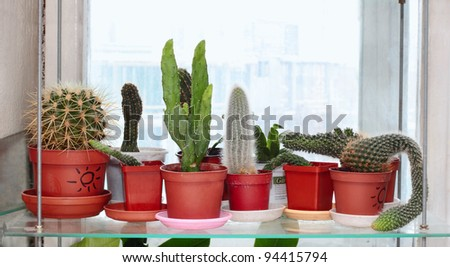 Stand with different kinds of cactus