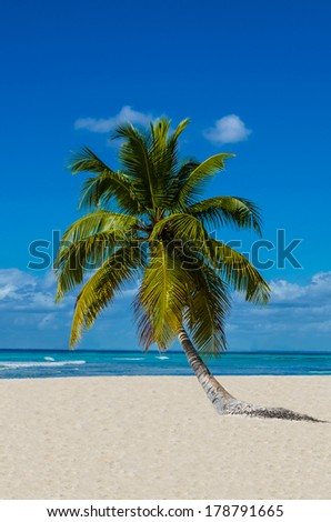 Standalone beautiful  palm tree on a sandy Caribbean beach with white sand, Dominican Republic - stock photo