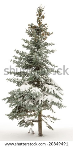 Standing alone fur-tree. Around white snow and the white sky. Winter. - stock photo
