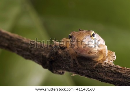Standing branches of the frog - stock photo