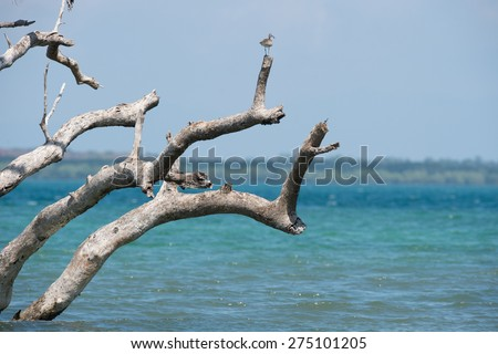 Standing dead trees that died after sea level rise from global warming. - stock photo