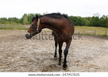 Standing horse on the dirty field at summer time - stock photo