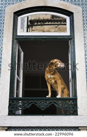 Standing in a window of the house a dog and looking at street - stock photo