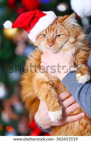 Standing man holding a fluffy red cat on Christmas background