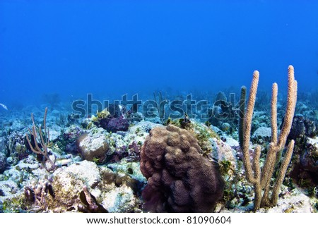 Star coral with sea rod - stock photo