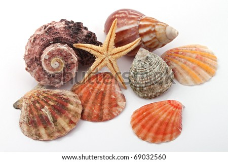 Star fish and sea shells over a white background. - stock photo