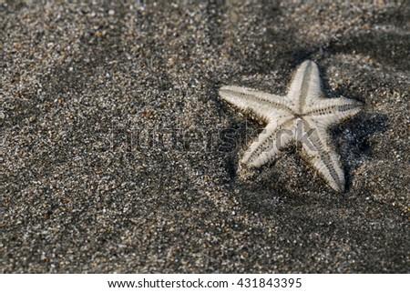 star fish on black sand beach. - stock photo