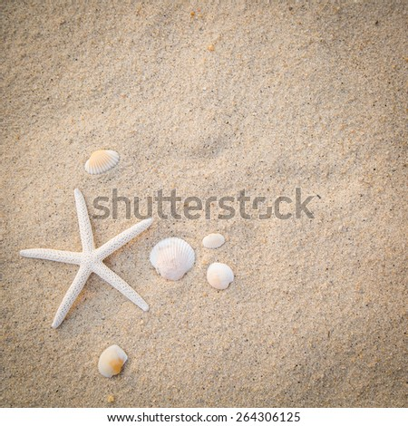 Star fish pull on beach for add your text and image. - stock photo