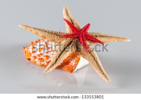 star fishes and seashell on white - stock photo