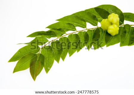 Star gooseberry and leaves on white background.