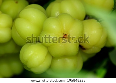 Star gooseberry on tree,Fruit in Thailand
