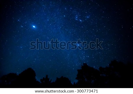 Star in the sky with tree silhouette - stock photo