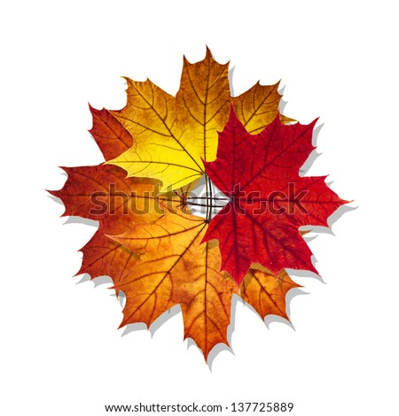 Star made with autumn maple leaf isolated on white background - stock photo