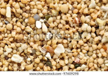 Star shaped sand can only be found in two beaches in the world. It is actually the shell of a microscopic animals. - stock photo