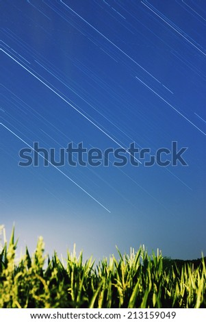 Star trails over green field of corn - stock photo