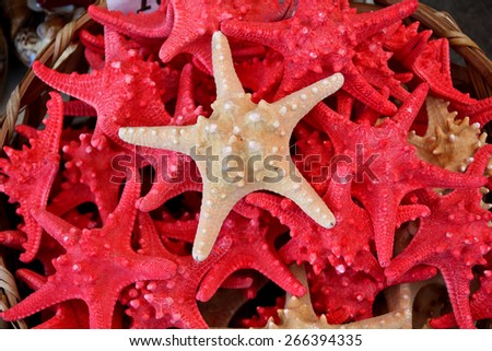 Starfish/A collection of tan coloured Starfish. - stock photo