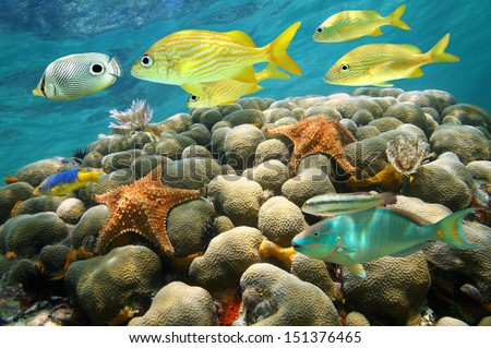Starfish and colorful tropical fish in a coral reef, Caribbean sea - stock photo