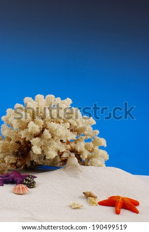 Starfish and coral on sand