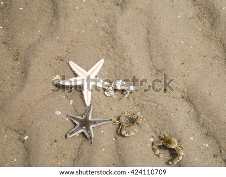 Starfish and Hermit crab buries itself in the sand, shallow water - stock photo