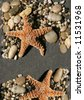 starfish and pebbles on black sand with copy-space - stock photo